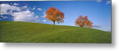 Cherry Trees On A Hill, Cantone Zug Metal Print by Panoramic Images