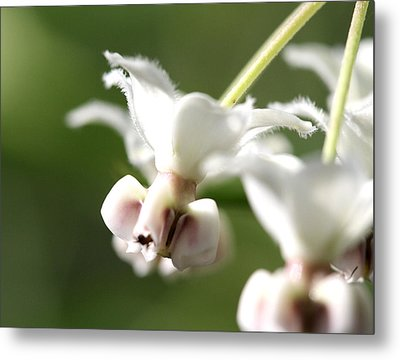 Chicago Botanical Gardens - 65 Metal Print by Ely Arsha