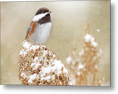 Chickadee And Falling Snow Metal Print