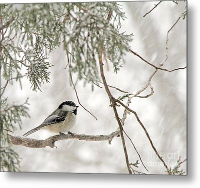 Chickadee In Snowstorm Metal Print