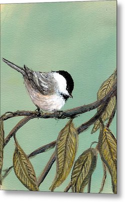 Chickadee Set 10 - Bird 1 Metal Print by Kathleen McDermott