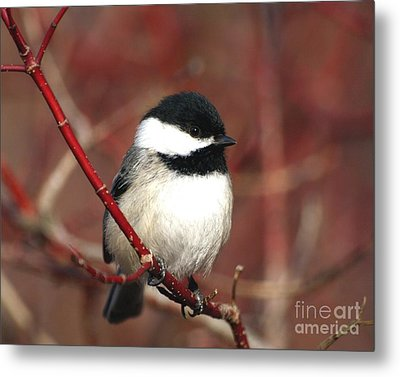 Metal Print featuring the photograph Chickadee by Susan  Dimitrakopoulos