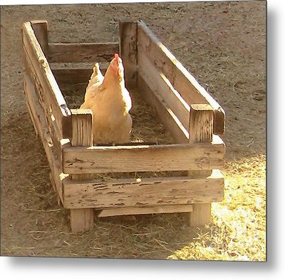 Metal Print featuring the photograph Chicken In A Box by Cristophers Dream Artistry