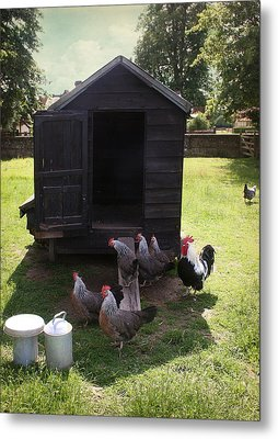 Chicken Run Metal Print by Stephen Norris