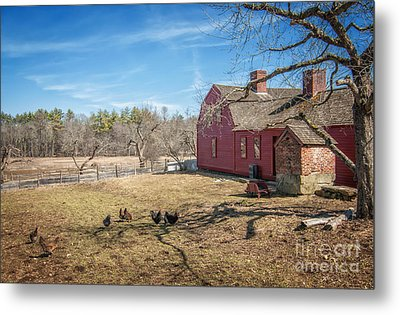 Chickens In The Yard Metal Print by Scott Thorp