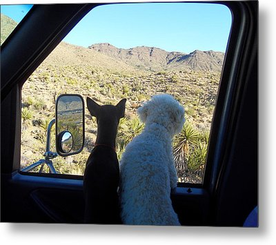 Chico And Ceaser Metal Print