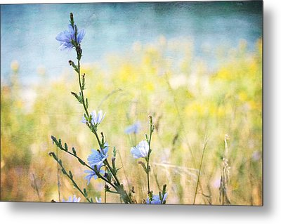 Metal Print featuring the photograph Chicory By The Beach by Peggy Collins