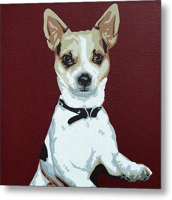 Chihuahua 2 Metal Print by Slade Roberts