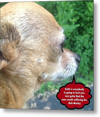 Chihuahua Deep Thoughts Metal Print by Lisa Piper