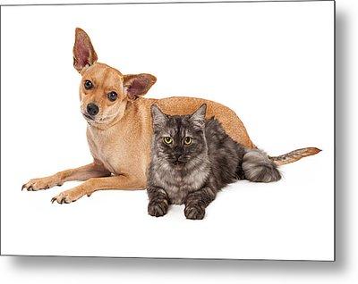 Chihuahua Dog And Gray Cat Metal Print by Susan Schmitz