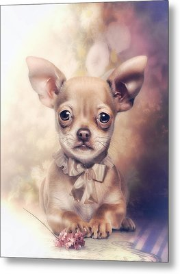Chihuahua Puppy Metal Print by Cindy Grundsten