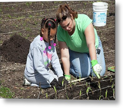 Child And Adult Planting Onions Metal Print