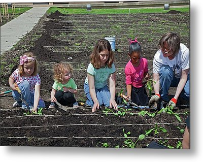 Children At Work In A Community Garden Metal Print by Jim West
