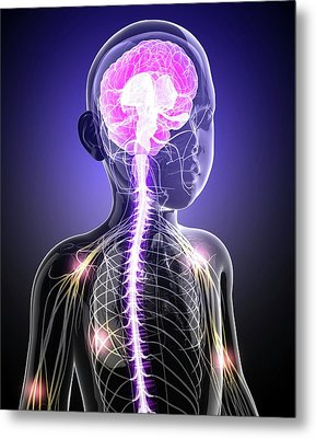 Child's Central Nervous System Metal Print by Pixologicstudio