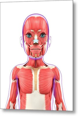 Child's Muscular System Metal Print by Pixologicstudio