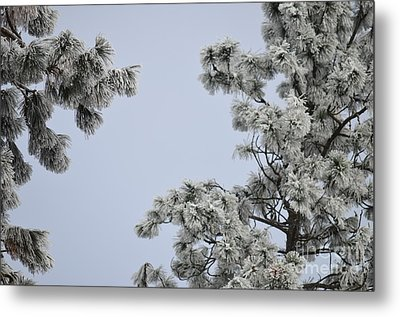 Chill Tree Metal Print by Greg Patzer