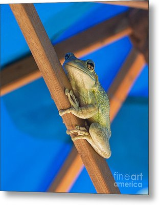 Chillin By The Pool Metal Print by Michelle Wiarda