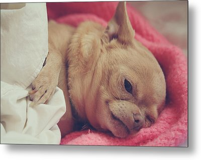 Chillin Metal Print by Laurie Search