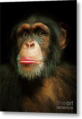 Chimp 20150210brun Metal Print by Wingsdomain Art and Photography