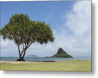 Chinamans Hat With Tree - Oahu Hawaii Metal Print by Brian Harig