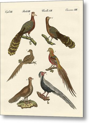 Chinese Birds Metal Print by Splendid Art Prints