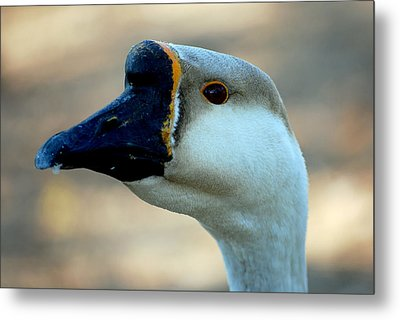 Chinese Goose Metal Print by Lisa Phillips