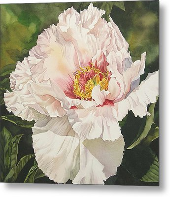 Chinese Tree Peony Metal Print by Alfred Ng
