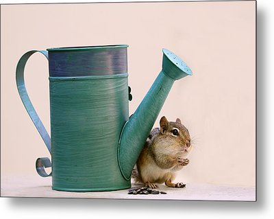 Chipmunk And Watering Can Metal Print by Peggy Collins