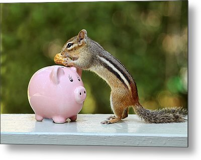 Chipmunk Saving Peanut For A Rainy Day Metal Print