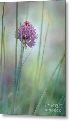 Chive Garden Metal Print by Priska Wettstein