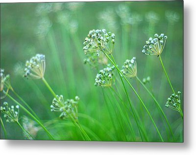 Metal Print featuring the photograph Chive Garden by Suzanne Powers