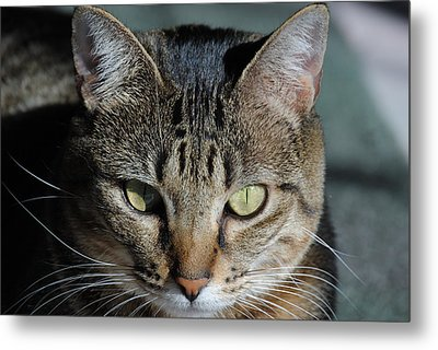 Chloe A Metal Print by Michele Kaiser