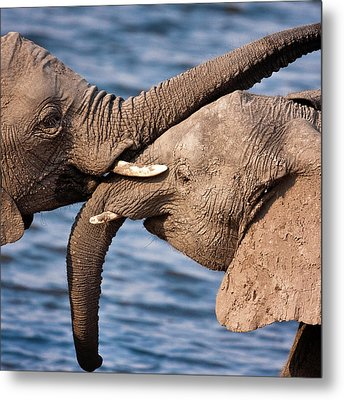 Chobe National Park, Botswana Metal Print by Janet Muir