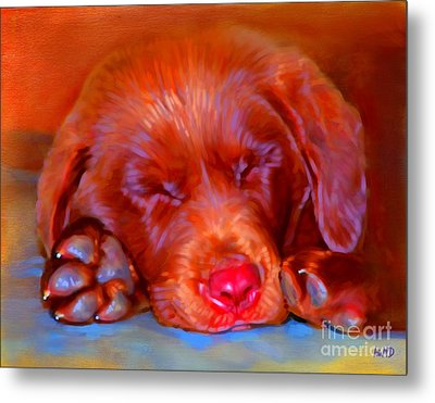 Chocolate Labrador Puppy Metal Print by Iain McDonald