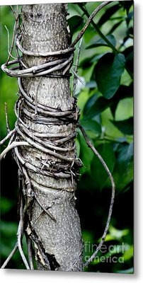 Metal Print featuring the photograph Choke by Lilliana Mendez