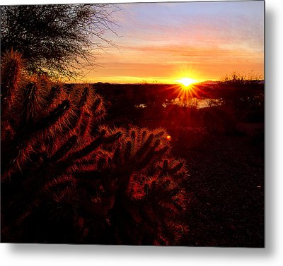 Cholla On Fire Metal Print