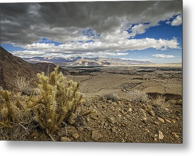 Cholla View Metal Print