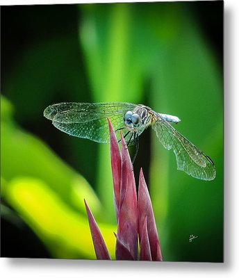 Chomped Wing Squared Metal Print by TK Goforth