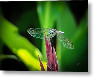 Chomped Wing Metal Print by TK Goforth