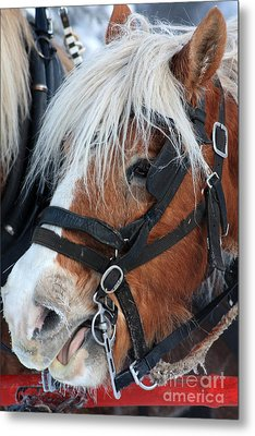 Metal Print featuring the photograph Chomping On The Bit by Alyce Taylor