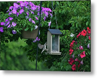 Metal Print featuring the photograph Chow Time For This Bird by Thomas Woolworth