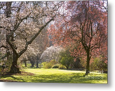 Christchurch Blossom In Hagley Park Metal Print by Colin and Linda McKie