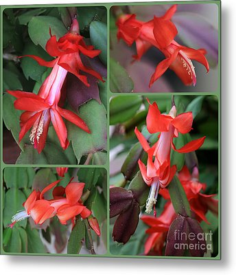 Christmas Cactus Collage Metal Print