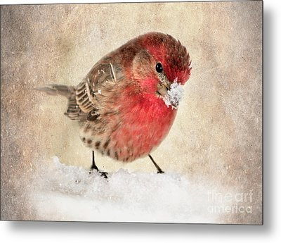 Christmas Card 9 Metal Print by Betty LaRue