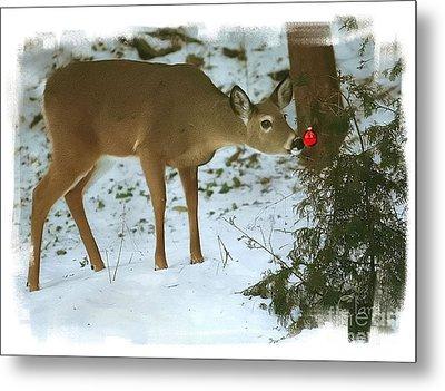Christmas Doe Metal Print by Clare VanderVeen