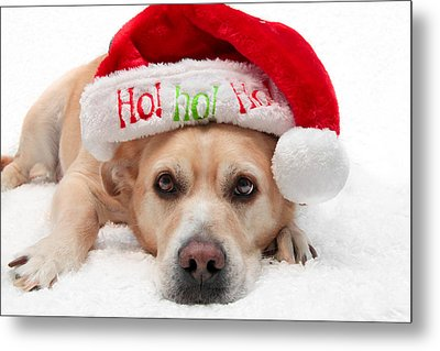Metal Print featuring the photograph Christmas Dog by Aaron Berg