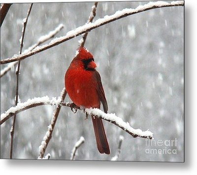 Christmas Eve Metal Print by Leea Baltes