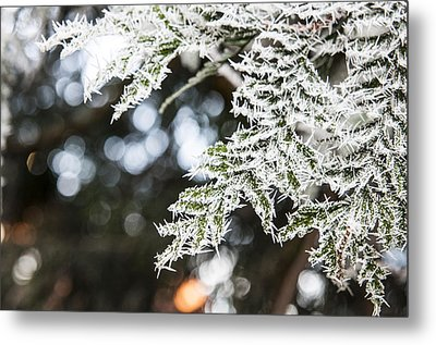 Metal Print featuring the photograph Christmas Frost by David Isaacson