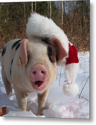Christmas Pig Metal Print