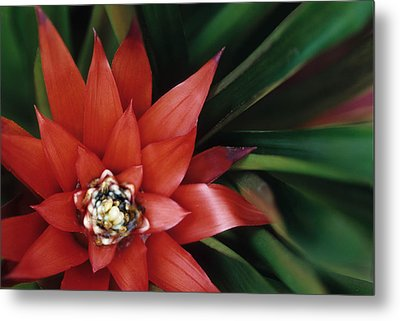 Christmas Plant Metal Print by Harold E McCray